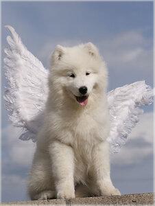 Юный ангел