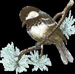 mzimm_snowflurries_bird.png