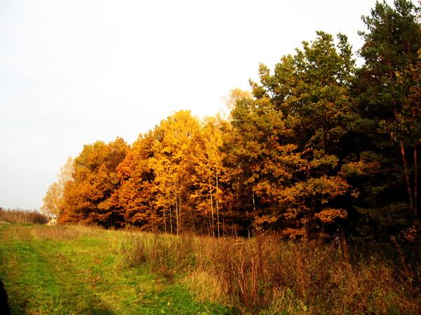 осень2 (9).jpg