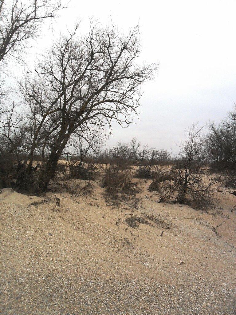 На песках, во время холодное ... SAM_5576.JPG