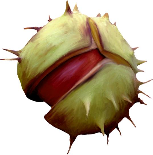 NLD Chestnut 2.png