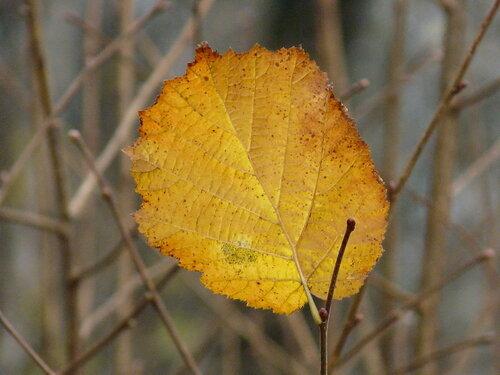 Последний листок.