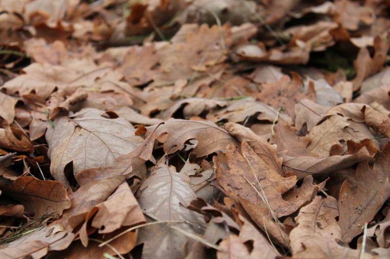 Мульча, перегной и земля из листьев
