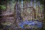 В лесу недалеко от деревни Фабрика, Максатихинского района