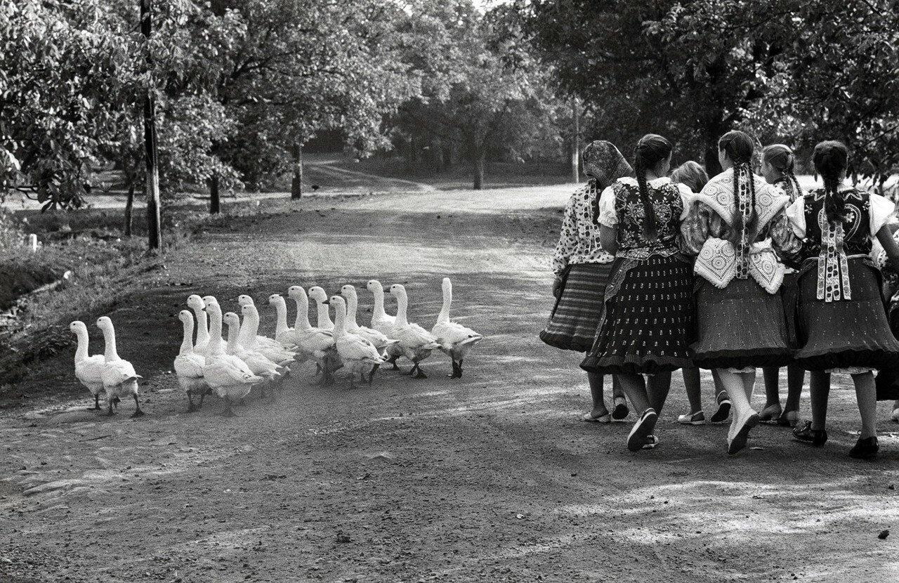 1964. Венгрия