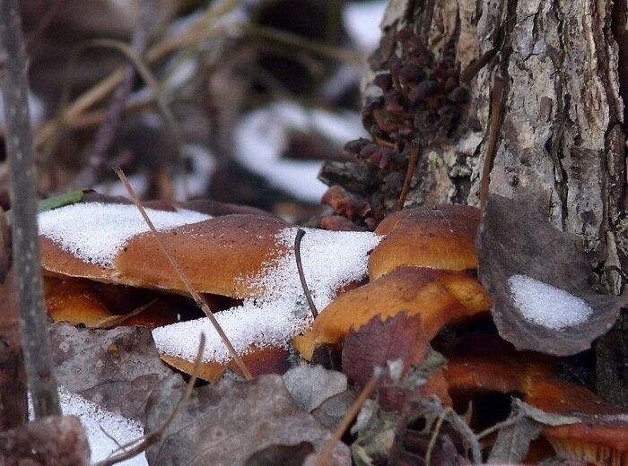 А вот кому грибочков свежезамороженных?