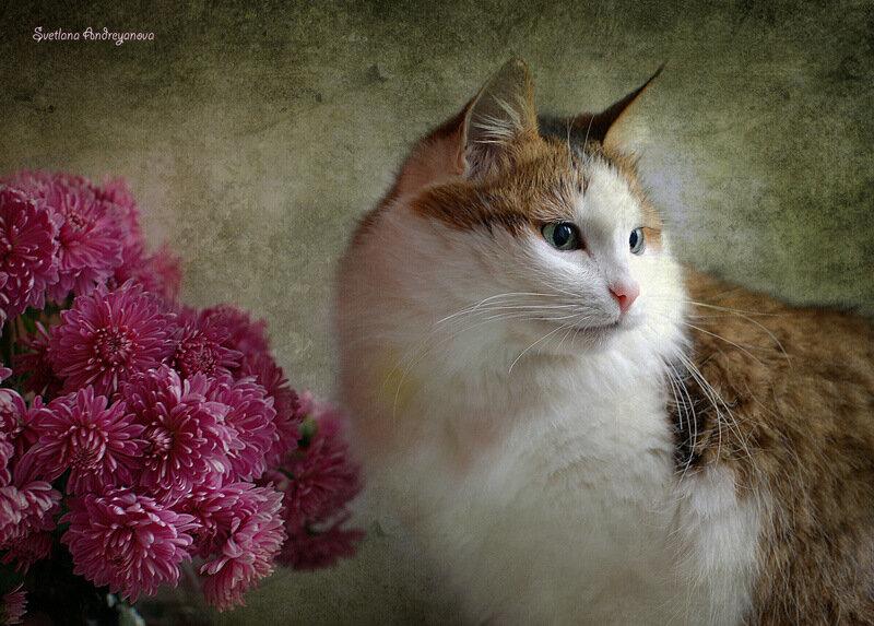 Муся и хризантемы