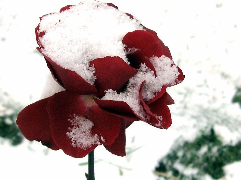 Первый снег тихо-тихо ложится...