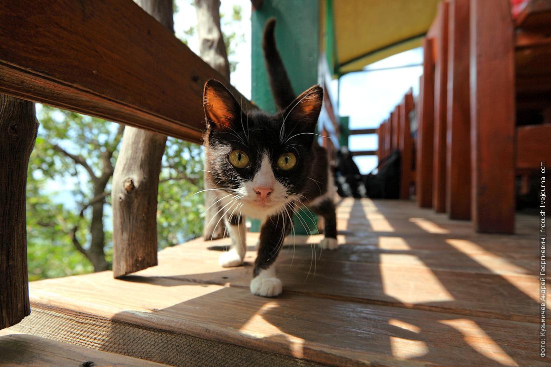 котик в кафе Алие Крым