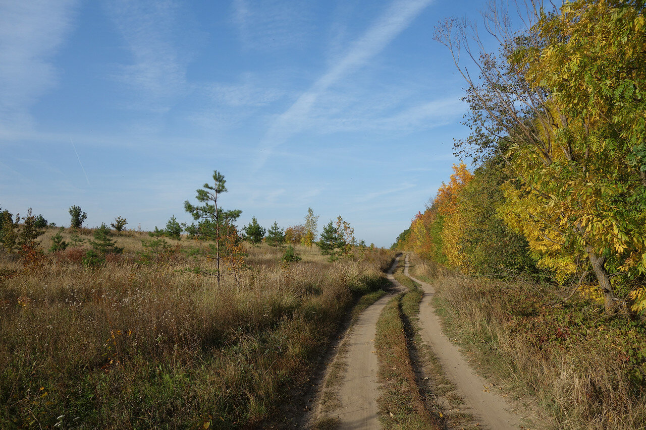 сосенки и ясени