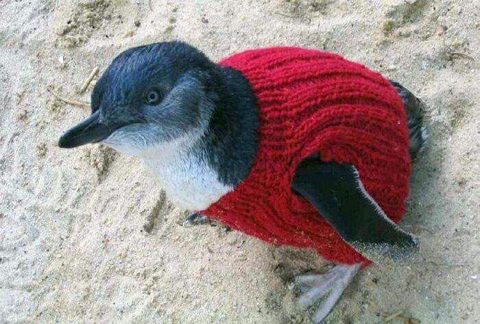 старик-вяжет-свитера-для-пингвинов5.jpg