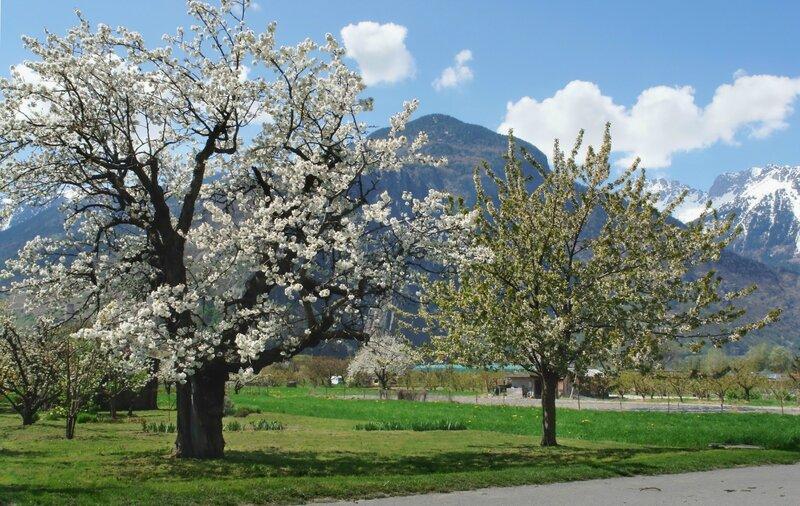 весны творенье