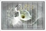 Egret white.png
