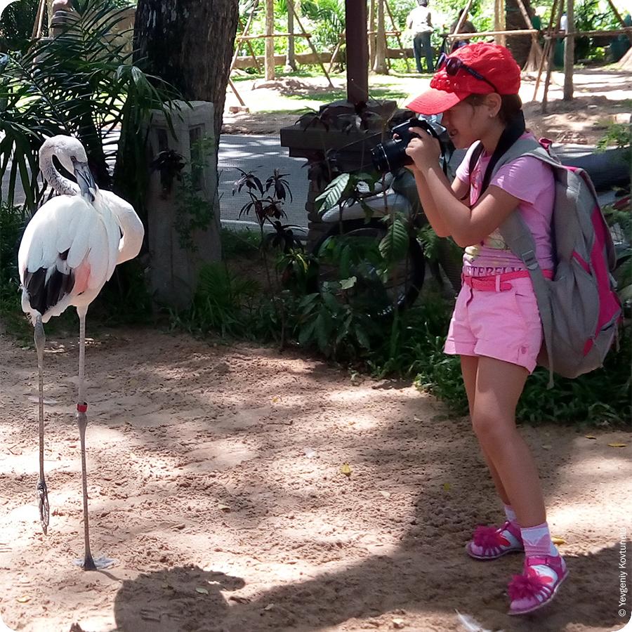 Розовый фламинго и юный фотограф. Контактный зоопарк Кхао-Кхео в Тайланде