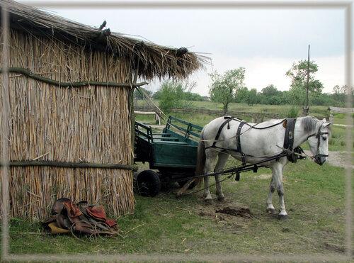 Типично сельское