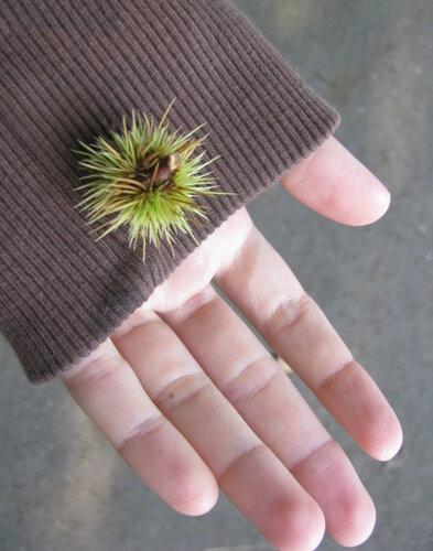 on a palm