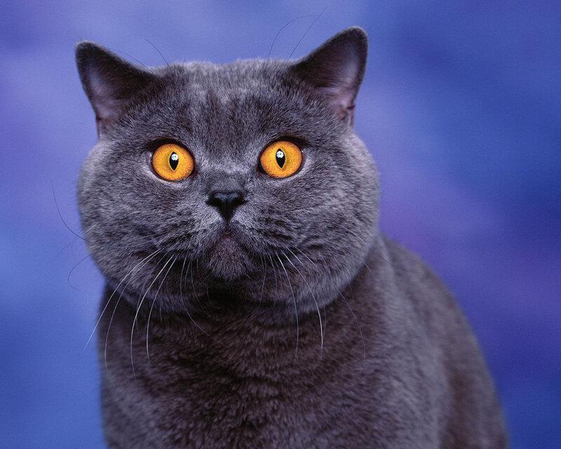 Вернуться к. Просмотров: 18.  Администратор. списку альбомов.  Теги. альбому. коты. кошки.  Предыдущая. котята.