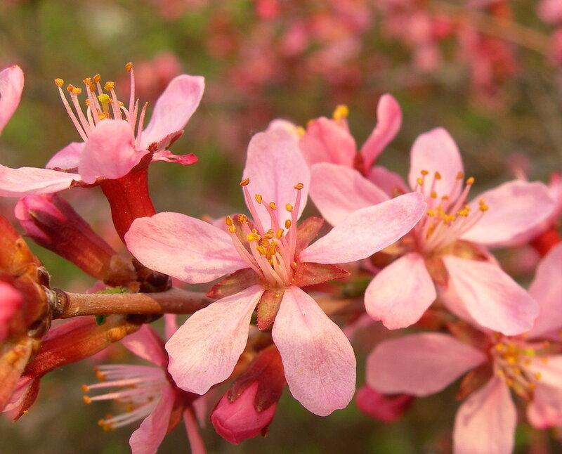 Классификация Цветковых.  Отдел покрытосеменные растения.ppt.  Фото 4. Признаки отдела.  900igr.net.
