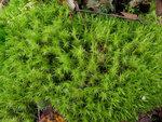Ataorch — все фотографии с меткой мох