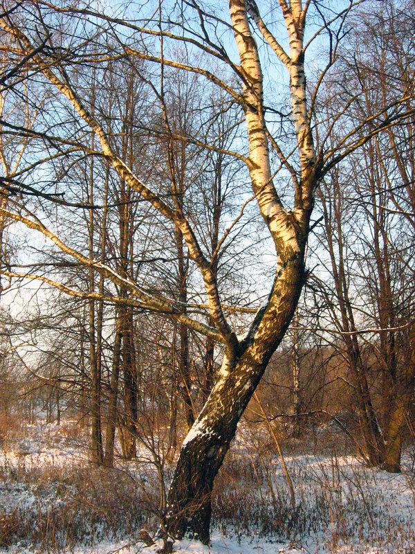 Мороз и солнце! У Кузьминского парка