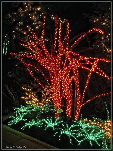 Garden d'Lights 2008 - 045