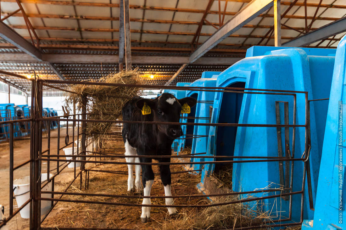 фотографии как делают молоко