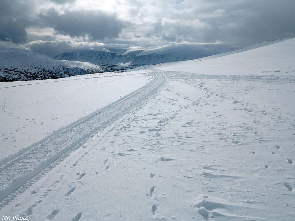 Из снежной пустыни