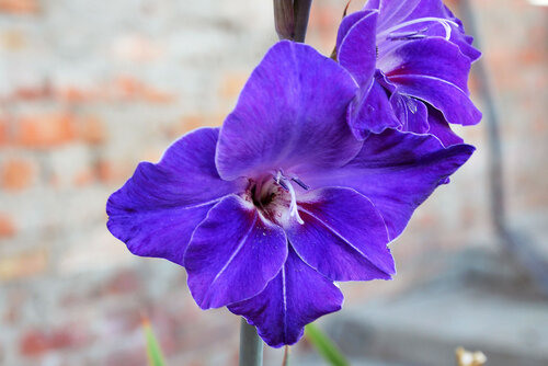 Гордый цветок!