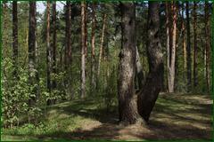 http://img-fotki.yandex.ru/get/31027/15842935.2ed/0_e3bd2_14d87639_orig.png
