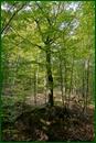 http://img-fotki.yandex.ru/get/31027/15842935.3bf/0_eee70_4fe8f4cc_orig.jpg