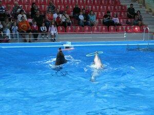Посещение дельфинария в Одессе