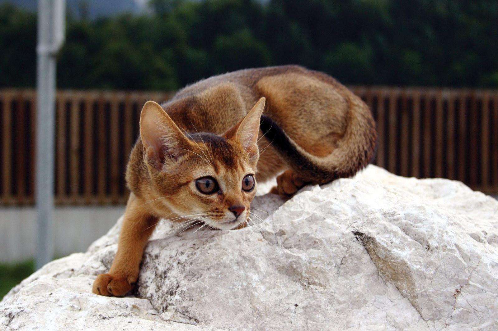 Котяча грація