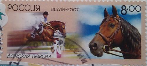 2007 донская порода лошадей 8.00