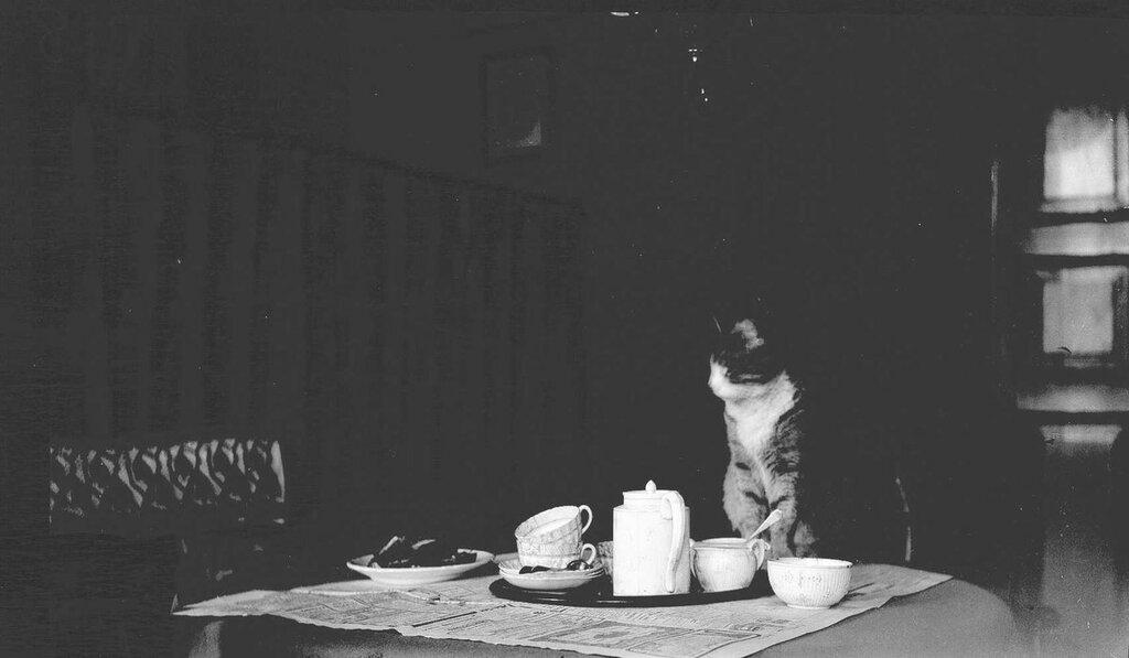 Katt pa spisestuebord med duk, kaffekopper, kanne og sukkerskal 1895-1906.