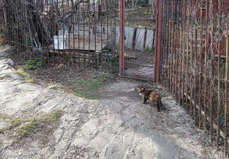 Кошка у калитки