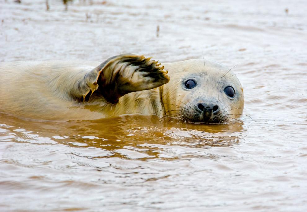 18. Турист на пляже. (Фото Rosario L. Cordoba   Barcroft Images   Comedy Wildlife Photo Awards)