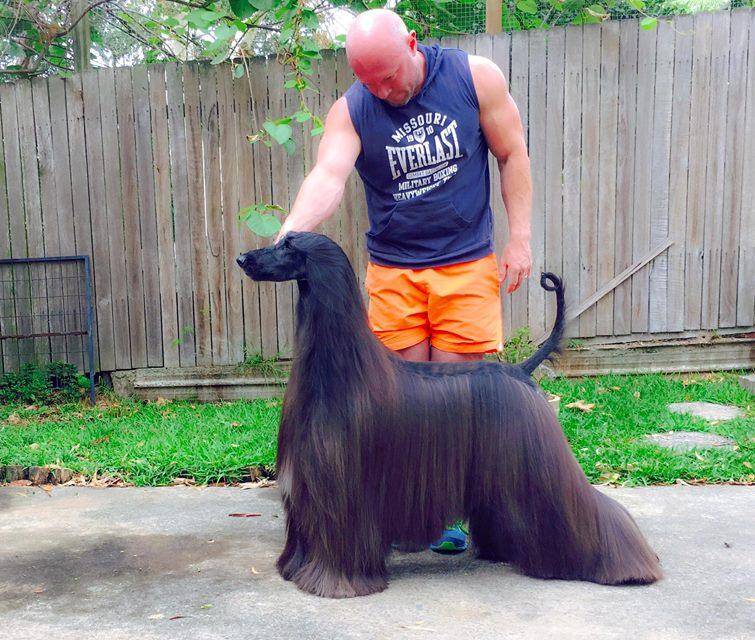 Люк Каванаг продолжает участвовать в собачьих выставках с другими своими питомцами — стаффордширским