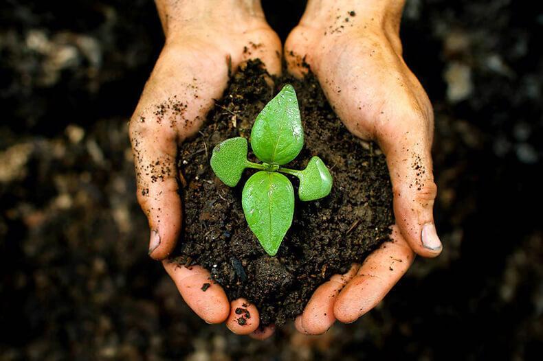 Люди элемента землинадежны и терпеливы. Силы земли наделяют их ответственностью по отношению к