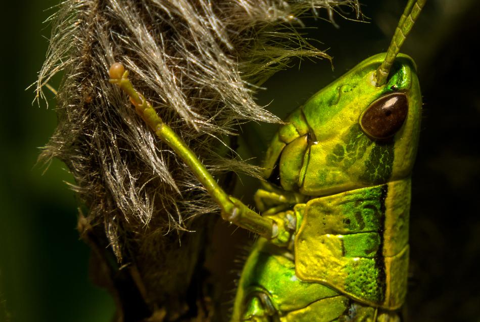 Да, зеленые есть, и их довольно много…И они одни из самых красивых…