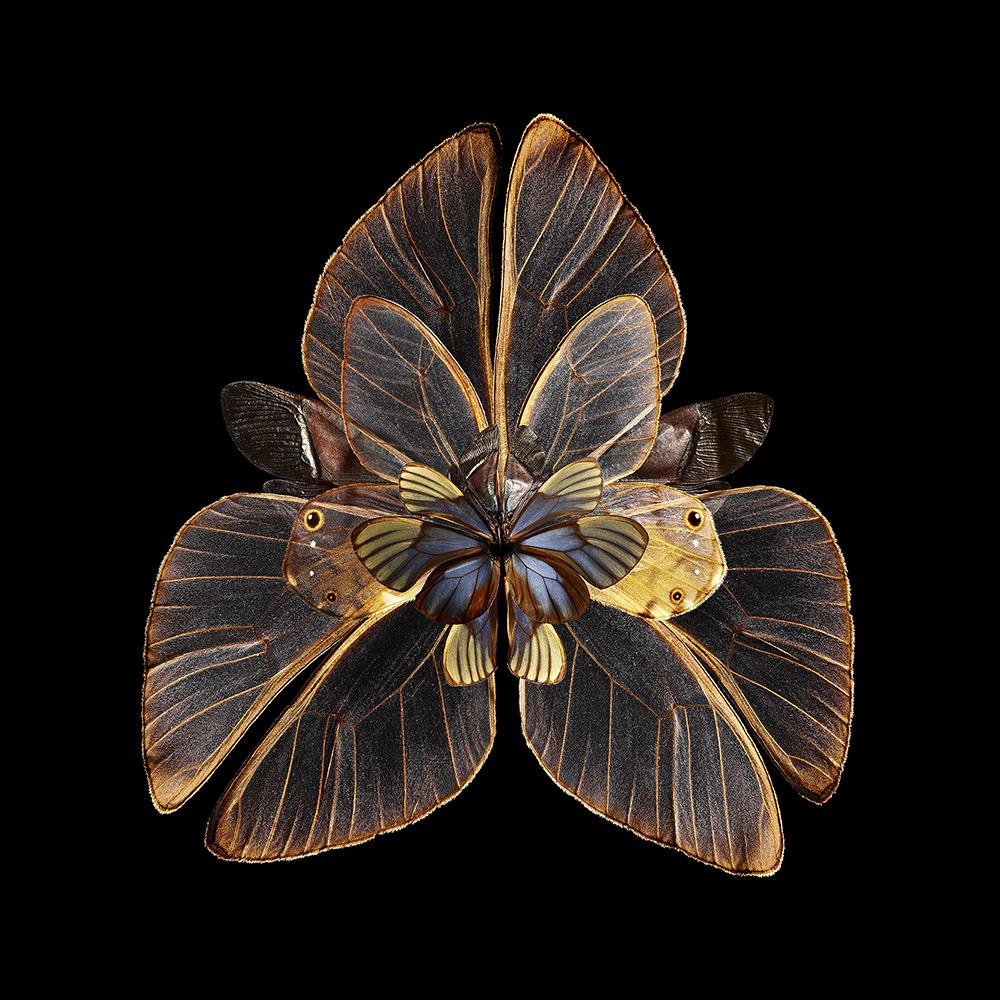 Mimesis - Lubhyati Solitudinis , 2014. Chromogenic print. Format 180 x 180cm (70.9 x 70.9 in)