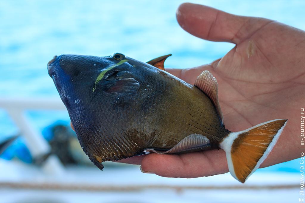 рыбалка в Красном море Хургада
