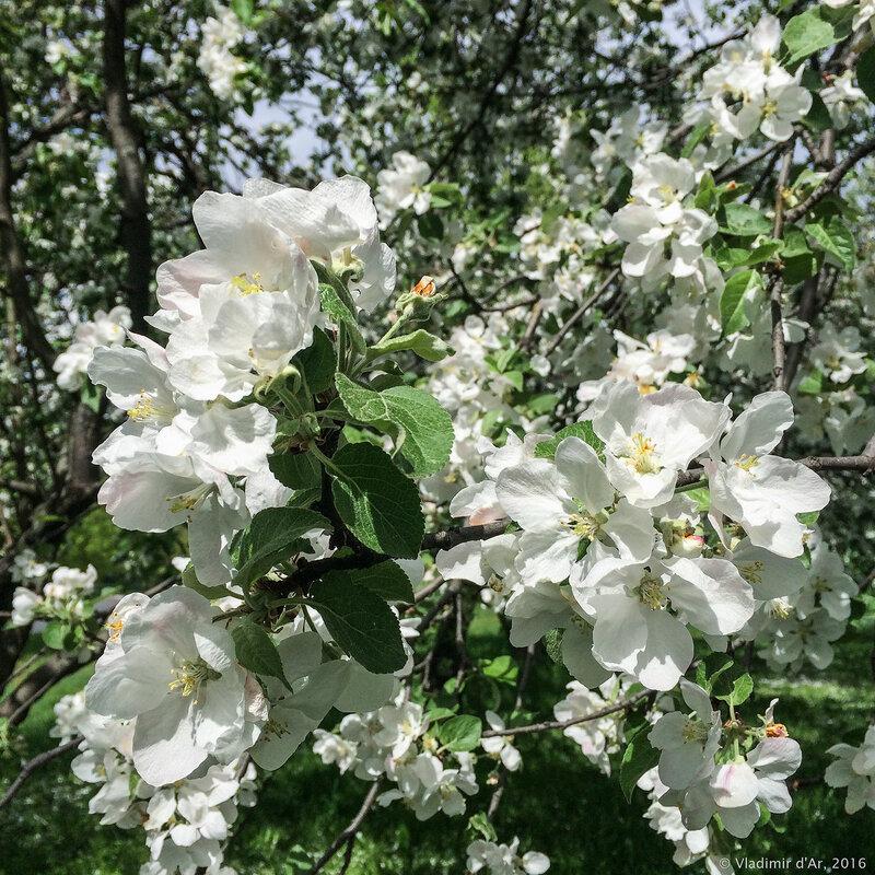 Цвета мая