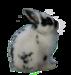 Rabbit 11.png
