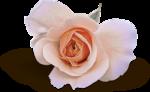 valentina_shabbyfall_el10_sh.png