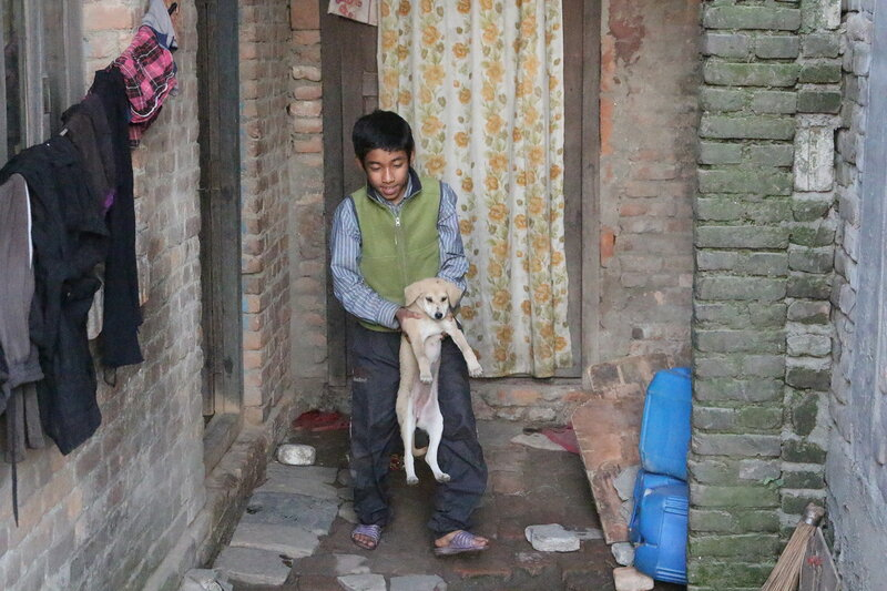 Живность на непальских улицах