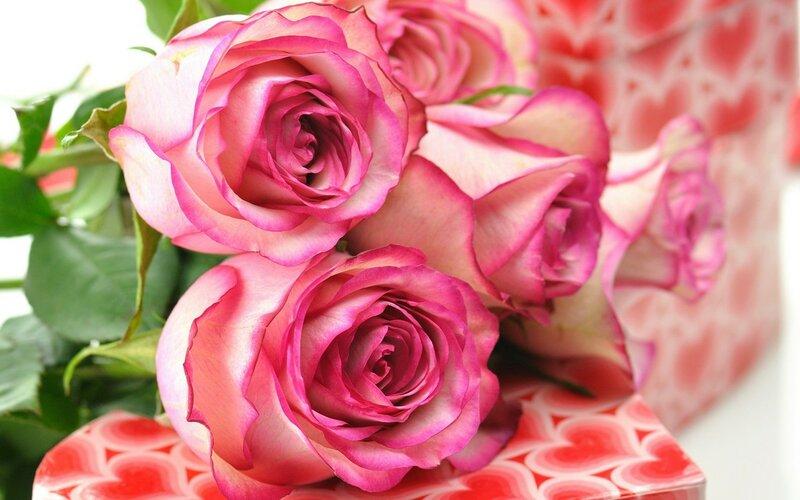 обои на рабочий стол самые красивые розы для тебя № 164797  скачать
