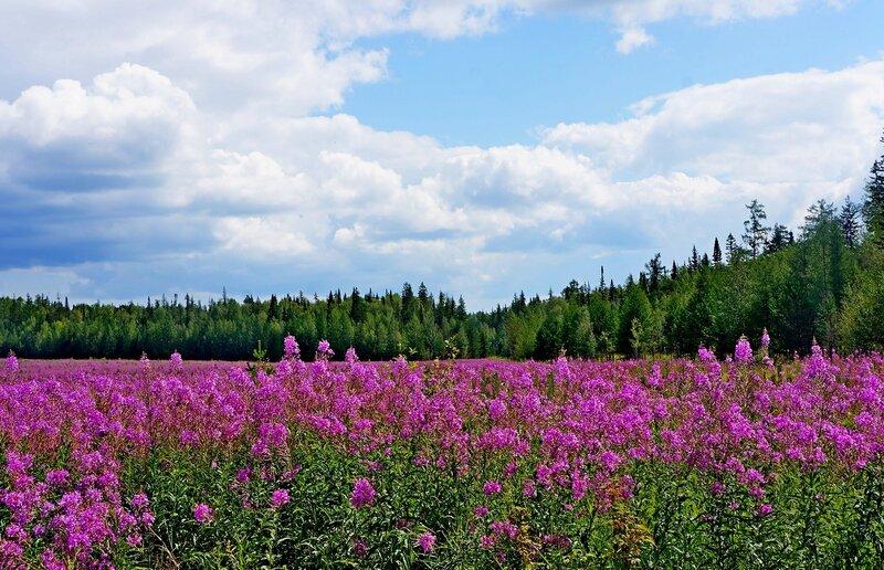 Прошлым летом в Сибири.jpg