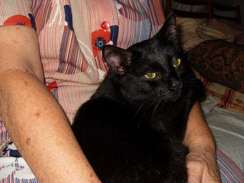 Черный кот на руах у мамы