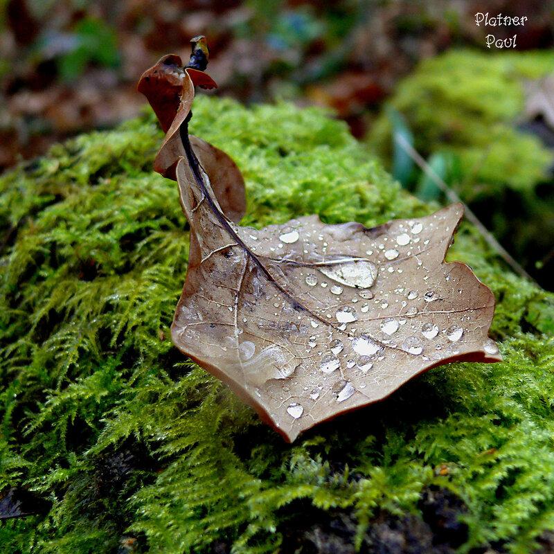 Капли в ладони осени (уже не осень, но и не зима....)
