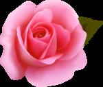 роза61.png